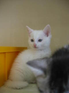 ペルシャ子猫 014.jpg