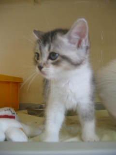 ペルシャ子猫 018.jpg