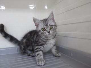 子猫白石店 008.jpg