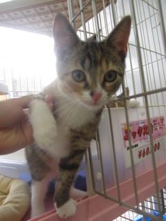 子猫白石店 012.jpg