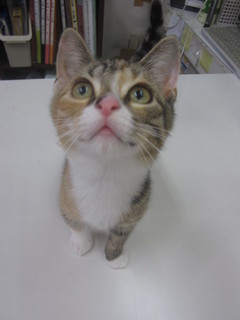 子猫白石店 016.jpg