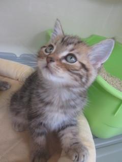 子猫白石店 027.jpg