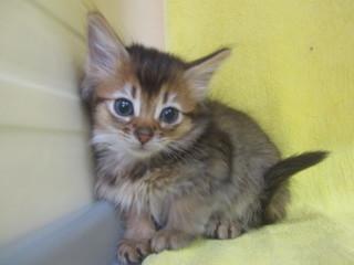 子猫写真 003.jpg