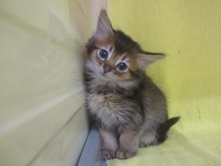 子猫写真 004.jpg