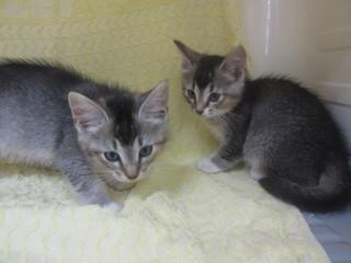白石の子猫達 053.jpg